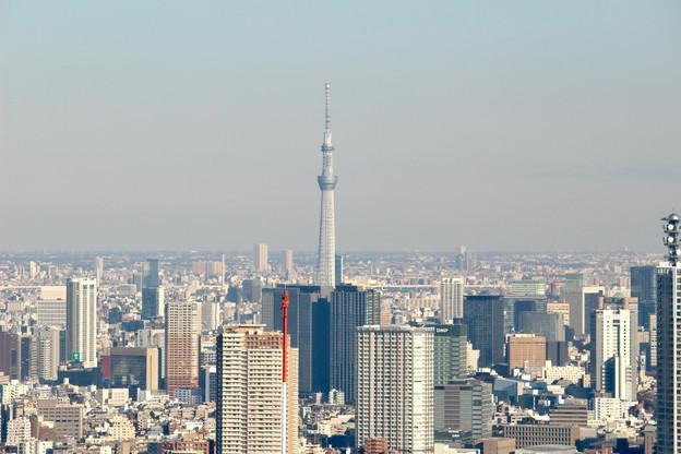 Tokyo Skytree|View from the Tokyo Metropolitan Government|Takako Kanawa|Shoichi Design|金輪 貴子