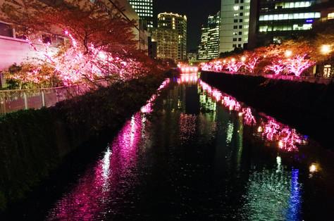 Along the Meguro River|Gotanda|Tokyo|Takako Kanawa|Shoichi Design|金輪貴子