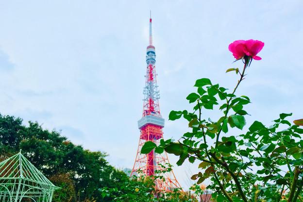 Tokyo Tower|Takako Kanawa|Shoichi Design|金輪貴子