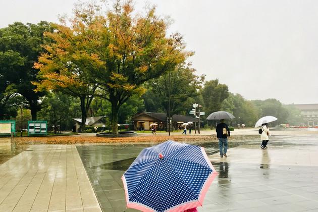 Rainy day|Ueno Onshi Park|Takako Kanawa|Shoichi Design|金輪 貴子