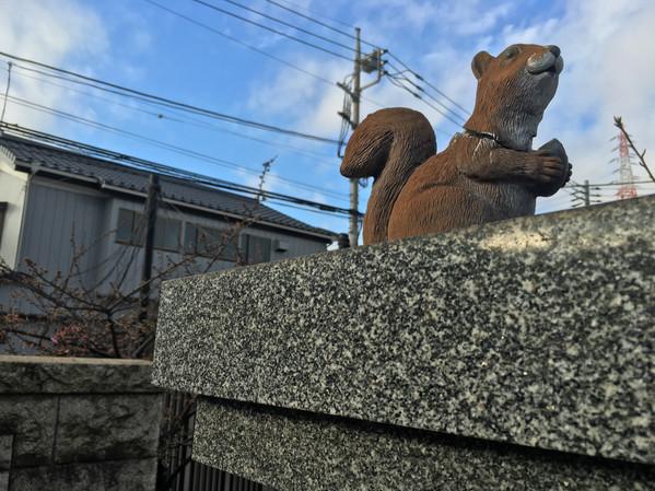 お願いリスちゃん|Ryuō-in|龍王院|空の写真|Takako Kanawa|金輪 貴子|Shoichi Design