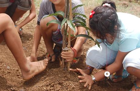 pema-tsal-plant-mango-trees.png