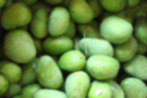 mangos-pema-tsal.png