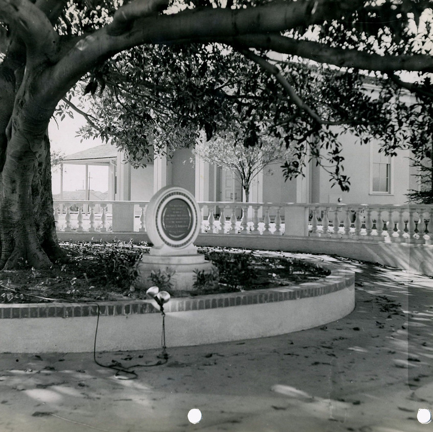 Moreton Bay Fig Tree in the 1950s