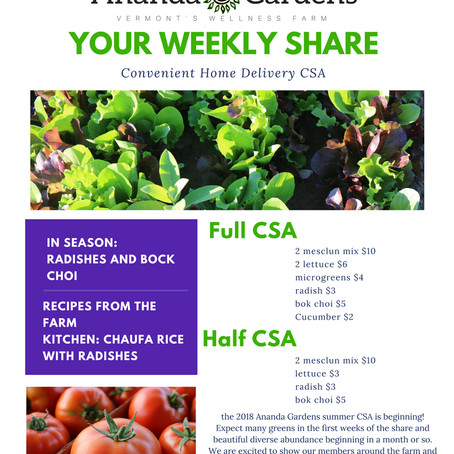 Week 1: your first Share is here!