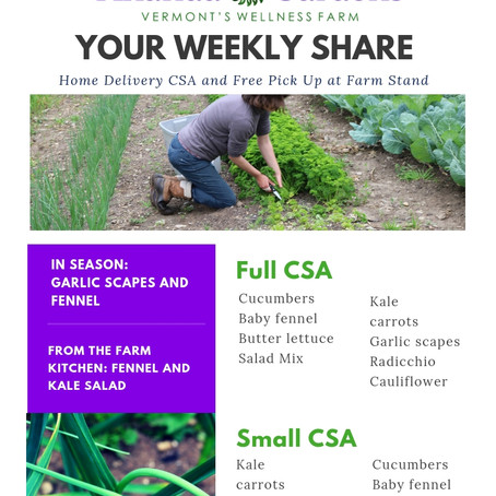 Your CSA: Week 3