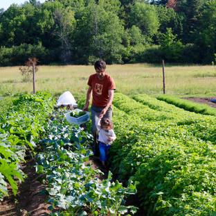 Ananda Gardens Farm Life
