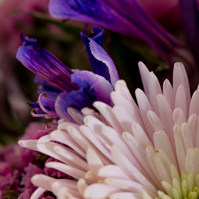 flores.png