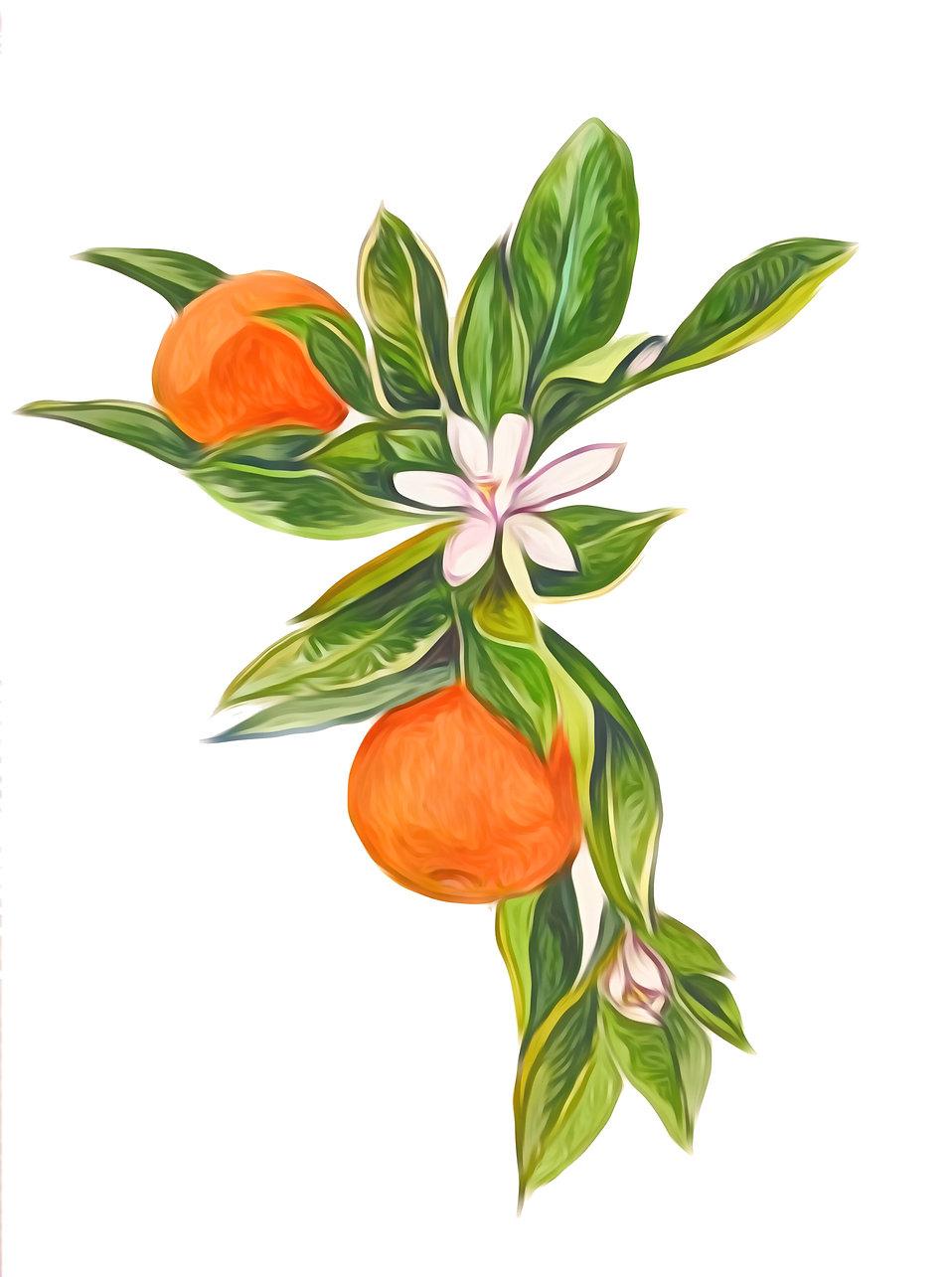 Valencia Fruit OPD.jpg