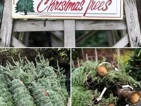 Fall Fundraiser: Christmas Tree & PawThaw Ice Melt Sale