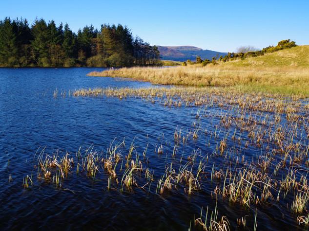 Waters Edge, Loch Walton