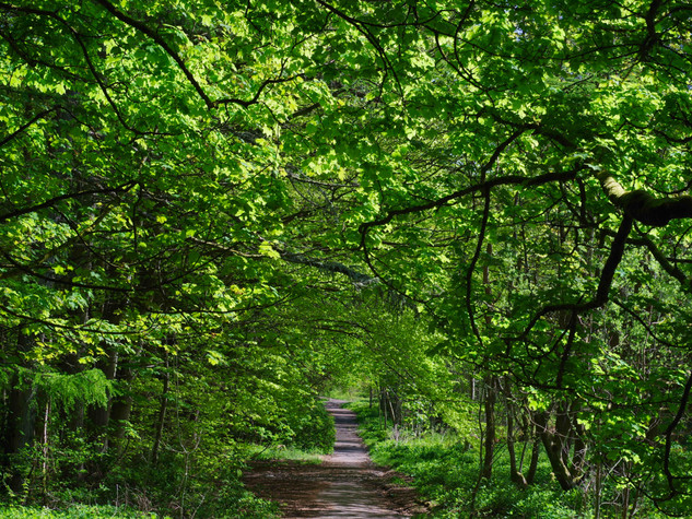 Castle Path, Spring