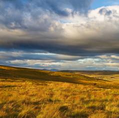 Golden Moors