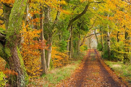 Fine art print - Autumn Lane