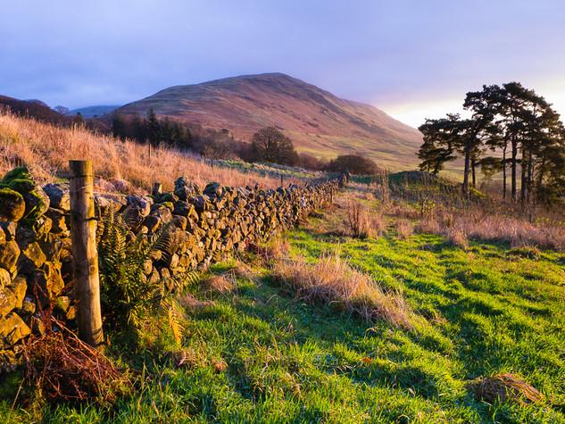 Campsie Glen, Winter Dawn