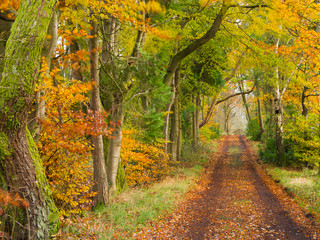 Autumn Lane, Lennoxtown