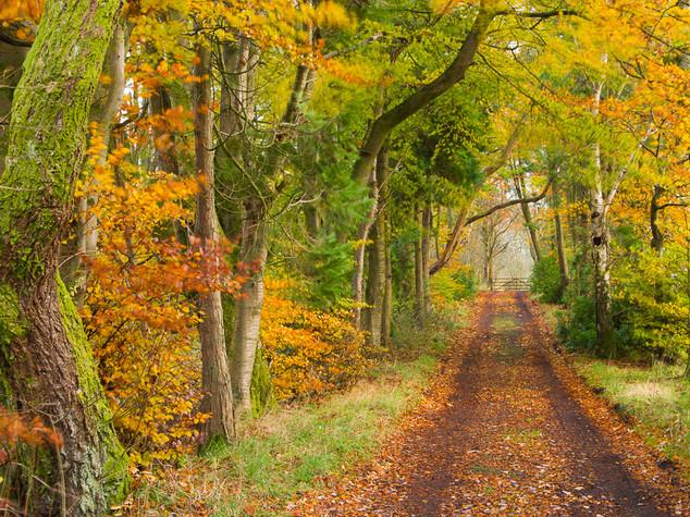Autumn Lane, Lennoxtown