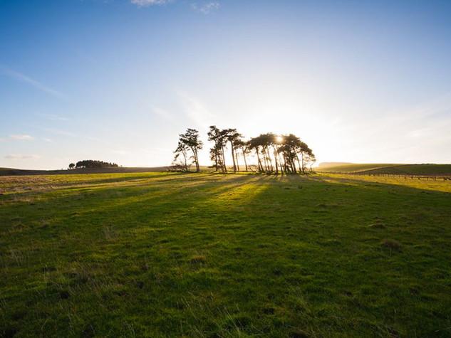 Dawn Pines, Burnside