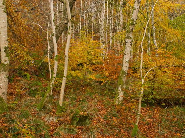 Woodland, Callander