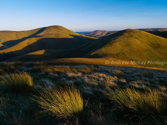 Sunlit Grasses & Tudhope Hill