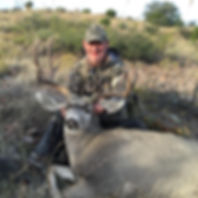 Wide Trophy Mule Deer