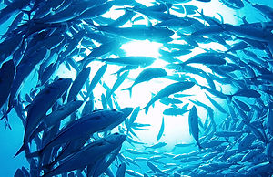 fish-3-html.jpg