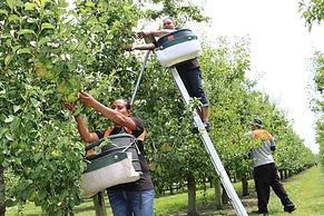 Seasonal-WOrk-Women-seasonal-workers-RNZ