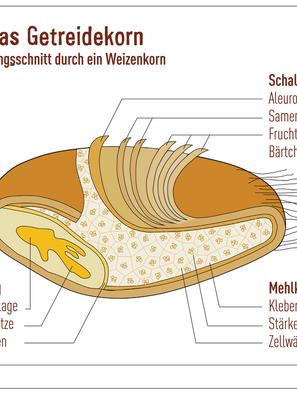 """Das Mehl """"Einmaleins"""""""