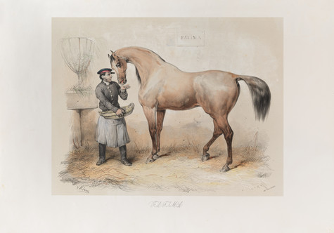 Documentation of the Book of Arabian Horses for Dubai Library
