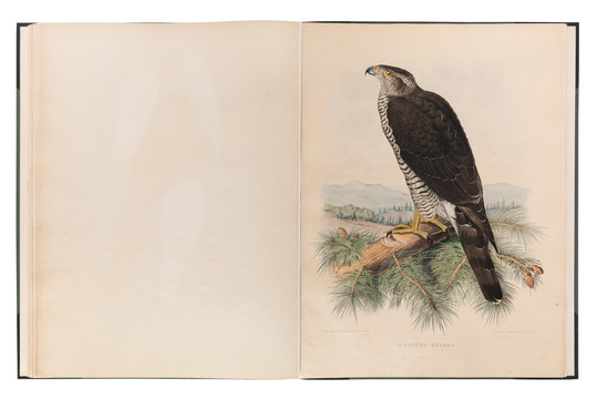 Book of Falcons documentation for Dubai Library
