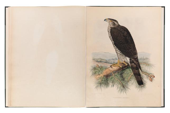 Book of Falcons documentation for Dubai Library