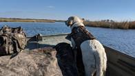 Tikka riding boat