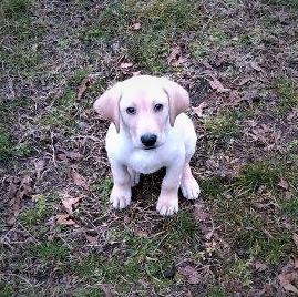 blue as puppy.jpg