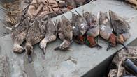 ducks that tikka retrieved