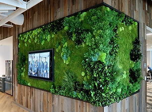 preserved moss usa forest preserved fern