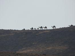 להתאמן בנינג'יצו במדבר