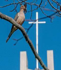 bird and cross.jpg