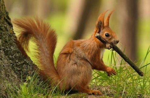 squirrel-6241081_640_edited.jpg