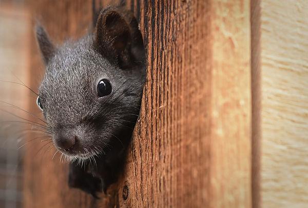 squirrel-4514426_640.jpg