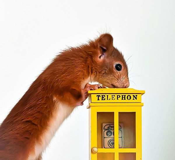 squirrel-4825561_640.jpg