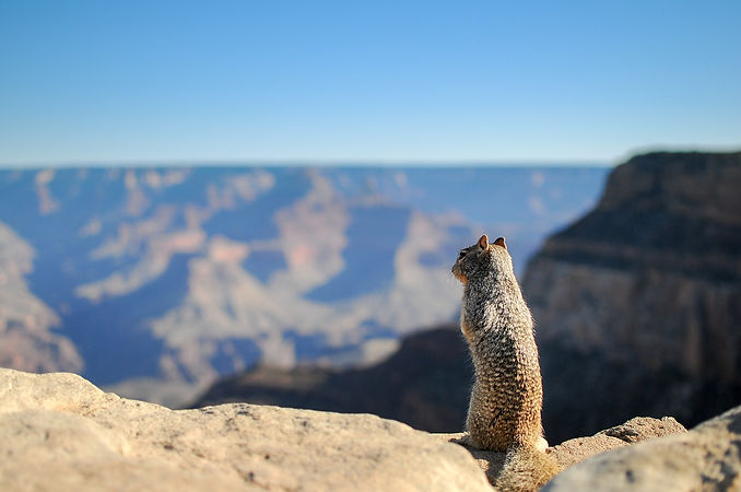 squirrel-731889_1280.jpg