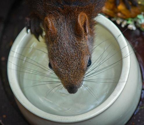 squirrel-5538515_640_edited.jpg