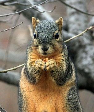 squirrel-241521_640_edited.jpg