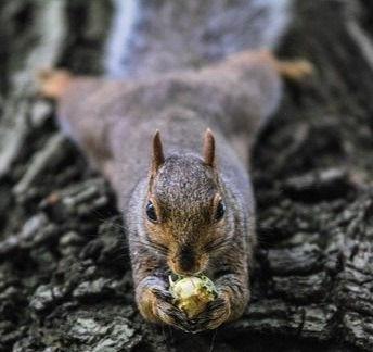 squirrel-1842152_640_edited.jpg