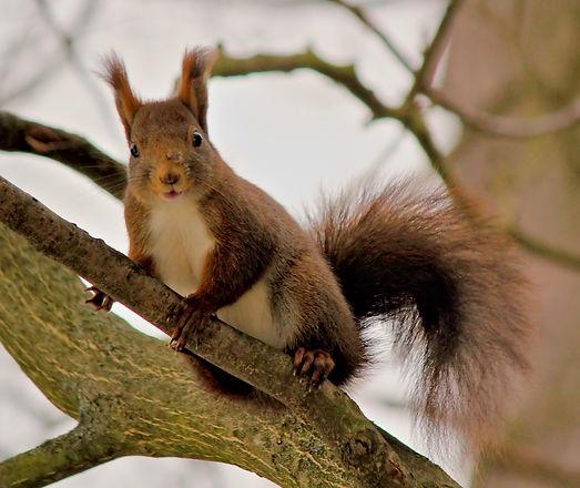 the-squirrel-4182882_1280.jpg