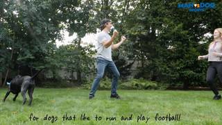 DOG Sports Challenge