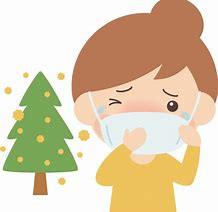 受験生の敵! 花粉症問題 杉の木伐採したい…
