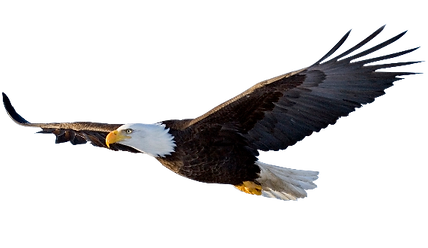 aquila-reale-png.png