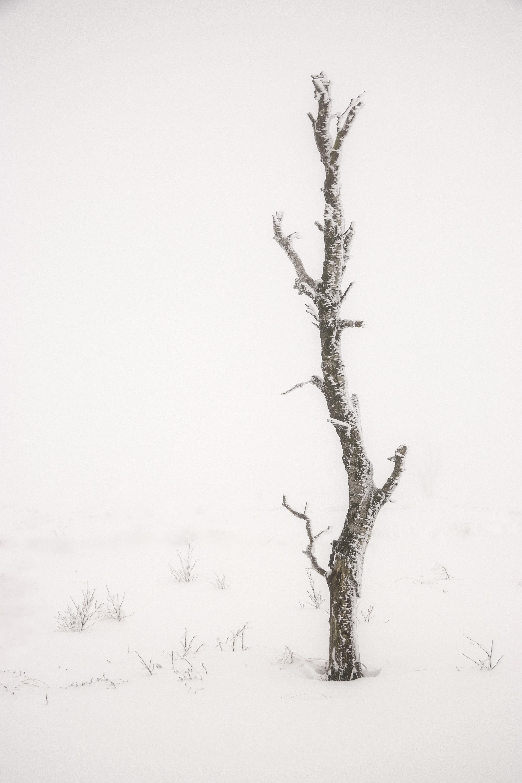 Karen Simal_sneeuwboompje_3