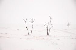 Karen Simal_sneeuwboompje_2